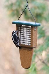 EcoTough Tail Prop Suet Feeder